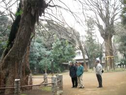 20080111tokyo_jussha151hikawa_jinja.JPG 東京十社   氷川神社 イチョウ